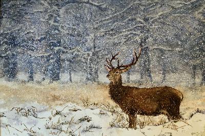 Werk van lid van vereniging voor tekenen, schilderen en aquarelleren Het Gelders Palet in Wageningen: Elsbeth Tanja-Winter-aquarel