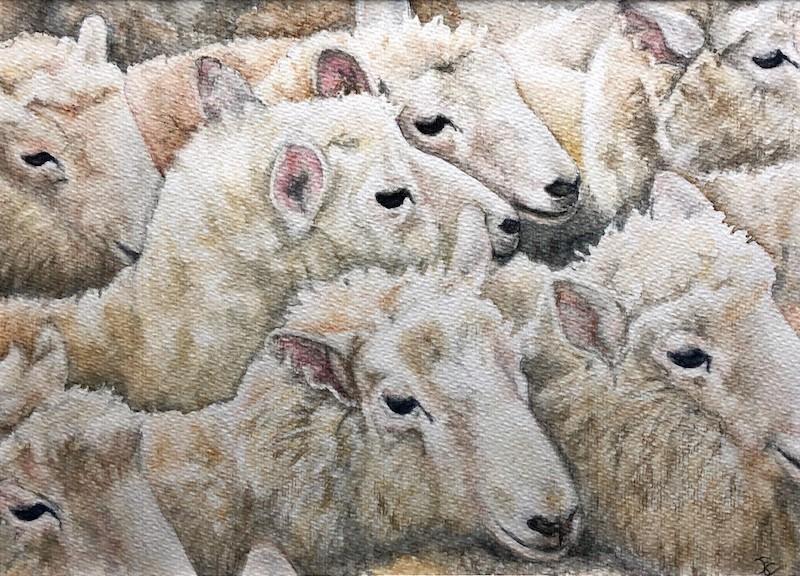 Ina Augustijn-schapen-aquarel