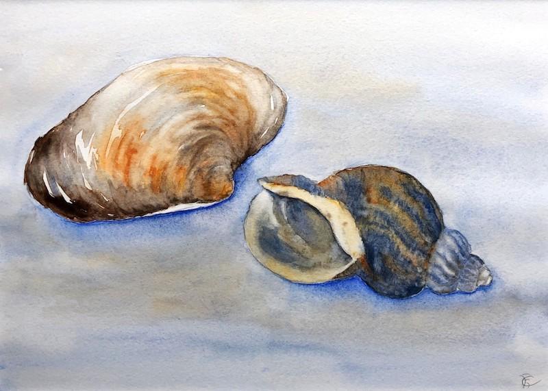 Ina Augustijn-schelpen-aquarel